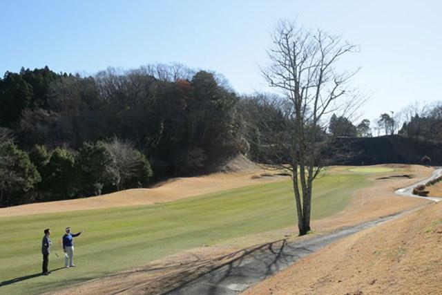 コース内の木にどんな意味があるか、考えたことはあるだろうか。ゴルファーのサポート役として存在することもあるとは……